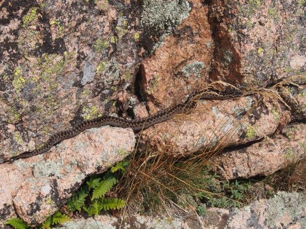 Ormen på Dannemark